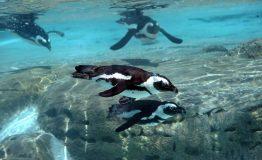 Baia dei pinguini2__2526634