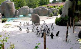 Baia dei pinguini__8475528